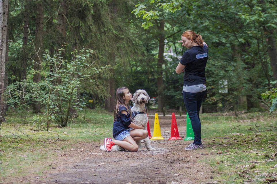P5COM and the Dutch Service Dogs Foundation